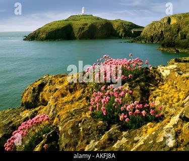 GB - Pays de Galles: Strumble Head Lighthouse Banque D'Images