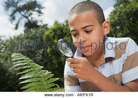 Garçon à la recherche de feuille avec loupe Banque D'Images