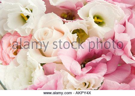 Close up de pétales de rose Banque D'Images