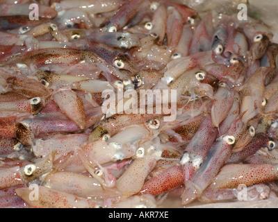 Sicile Italie Fish Market à Porticello Calmars Calmars Bébé Banque D'Images