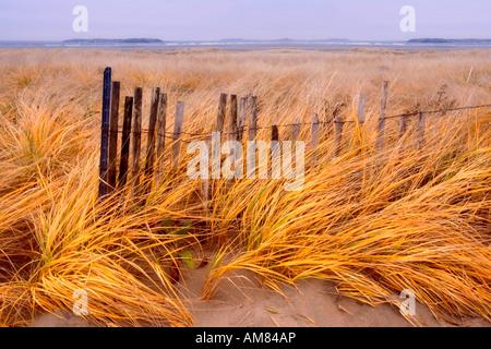 Les herbes des dunes dans le vent et une vieille clôture à neige sur Popham. Beach Maine Banque D'Images