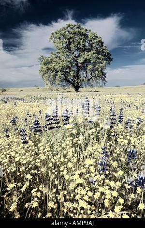Modifié numériquement, un contraste élevé de l'image arbre isolé et coloré bouquet de fleurs de printemps floraison, Banque D'Images
