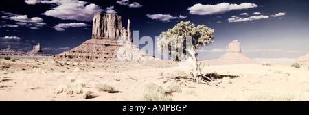 Modifié numériquement, à fort contraste de l'image Trois mitaines et un arbre du désert de Monument Valley, en Utah Banque D'Images