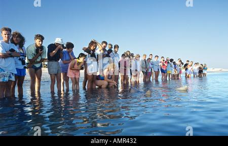 Beaucoup de gens debout dans une ligne dans l'eau prendre des photos tandis que l'observation de dauphins en Australie Banque D'Images