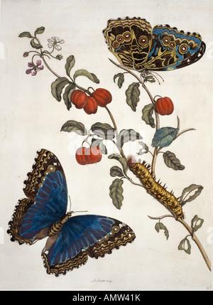 Des insectes de Surinam Banque D'Images