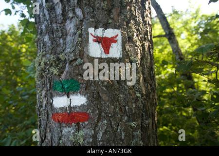 Africabox tv sur un arbre pour indiquer le sentier Cezallier (France). Marquage à la peinture pour indiquer le circuit Banque D'Images