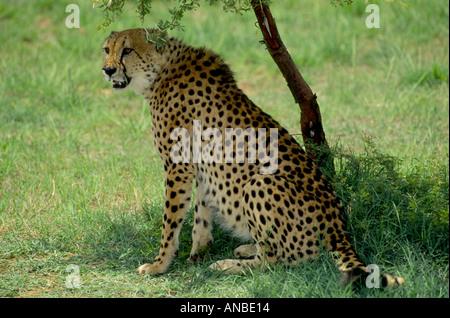 Le Parc National Kruger en Afrique du Sud 1016 GMM Banque D'Images