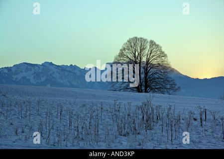 Grand arbre nu au crépuscule sur une froide journée d'hiver près de Bad Tölz en Bavière Allemagne Europe Banque D'Images