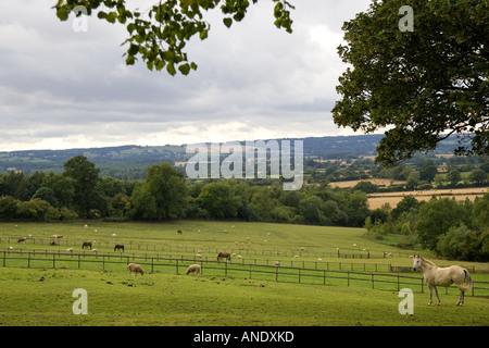 Chevaux et moutons paissant à Chastleton dans les Cotswolds Angleterre Royaume-Uni Banque D'Images