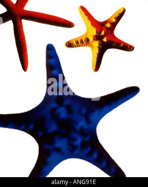 Trois étoiles de couleur sur fond blanc Banque D'Images
