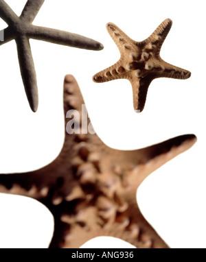 Trois étoiles sur fond blanc Banque D'Images