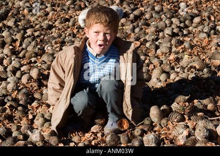 Un enfant à jouer tandis que les villageois la collecte des pommes de pin en Turquie 2005 Andirin, Banque D'Images