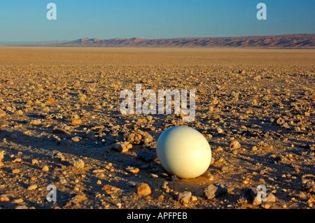 Œuf d'Autruche lain dans les plaines de gravier du désert du Namib en Namibie Banque D'Images