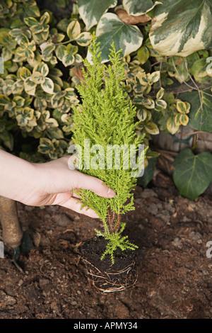 La plantation d'un petit arbre personne