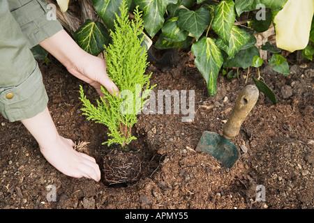 La plantation d'un petit arbre Femme