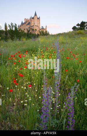 Ségovie, Castille et León, Espagne. Vue de l'Alcázar lointain champ de, fleurs sauvages en premier plan. Banque D'Images