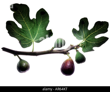 Direction générale de la Fig