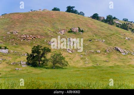 Arbres sur la colline rocheuse en Californie Banque D'Images