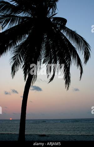 Cocotier (Cocos nucifera), silhouette devant le lever du soleil, du Kenya, de l'Océan Indien