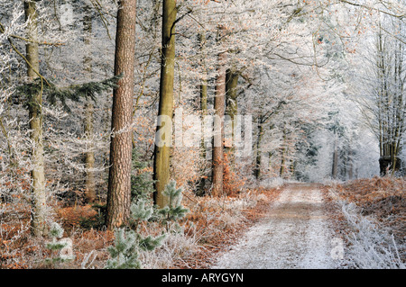 Quelques cours à l'Hirschberg en hiver, Limbach, Odenwald, Allemagne Banque D'Images