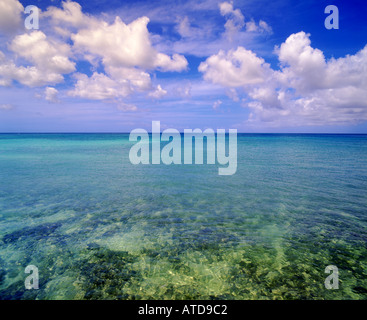 La mer turquoise au large de l'île des Caraïbes d'Aruba répond à un ciel bleu plein de fluffy clouds
