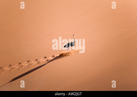 L'exécution d'autruche sur dunes Banque D'Images