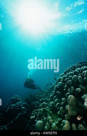 Raja Ampat, en Indonésie, l'océan Pacifique, plongée sous marine en eaux peu profondes avec des rayons de lumière Banque D'Images