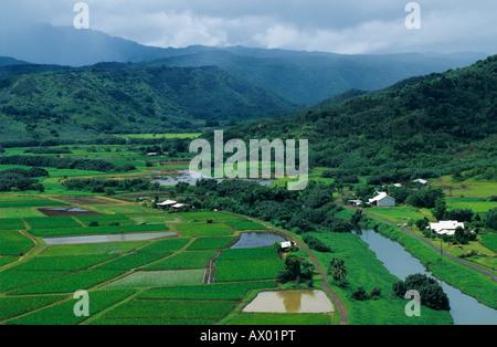 Les champs de taro dans la vallée d'Hanalei Hanalei Valley donnent sur Kauai Hawaii USA Août 1996 Banque D'Images