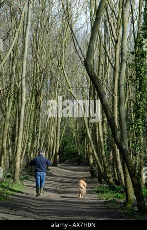 Man Walking dog sur sentier à travers les arbres d'hiver nu à la lumière du soleil, le Nonsuch Park, entre Ewell, Banque D'Images