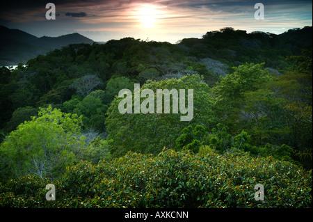 Magnifique coucher de soleil dans la forêt tropicale du parc national de Soberania, République du Panama. Banque D'Images