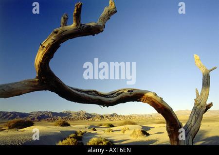 Géographie / voyages, USA, Californie, Death Valley, la vallée de la mort, l'arbre mort,