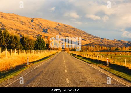 Road, Tarras, Central Otago, île du Sud, Nouvelle-Zélande, Pacifique Banque D'Images