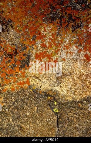 Close up de lichens poussant sur des rochers dans l'Alabama Hills près de Lone Pine en Californie Banque D'Images