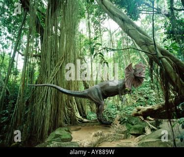 Dilophosaurus (le Spitter) dinosaure dans la forêt tropicale