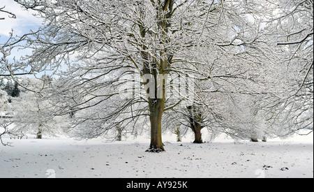 La neige a couvert des arbres dans la campagne de l'Oxfordshire. UK Banque D'Images