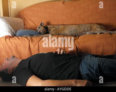 Greyhound couchée sur un canapé, tandis que le propriétaire se trouve sur marbre Banque D'Images