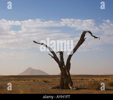 Arbre mort, Désert du Namib, Namibie, Afrique