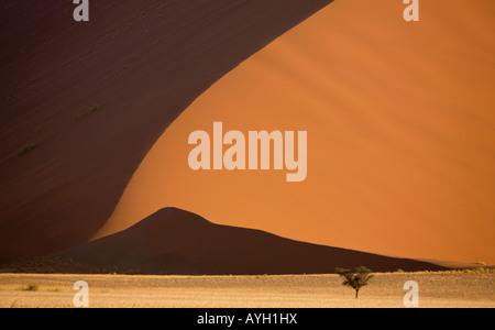 Arbre en face des dunes de sable, Désert du Namib, Namibie, Afrique Banque D'Images