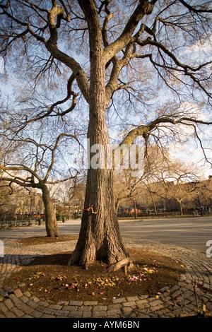 Arbre généalogique Hare Krishna Tompkins Square Park 1966 orme premier chant en dehors de l'Inde New York East village
