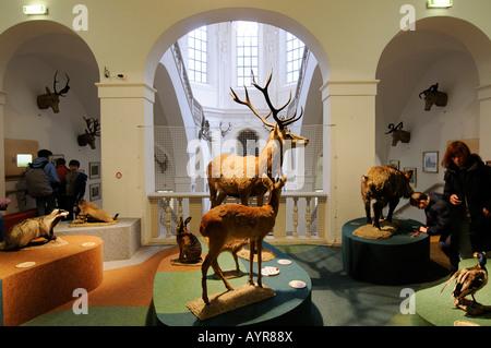 Les animaux en peluche, Deutsches Jagd- und Fischereimuseum (Musée allemand de la chasse et de la pêche), Munich, Bavière, Allemagne