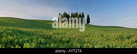 Bosquet de cyprès cupressus sempervirens sur hill à Val d Orcia Toscane Italie Banque D'Images