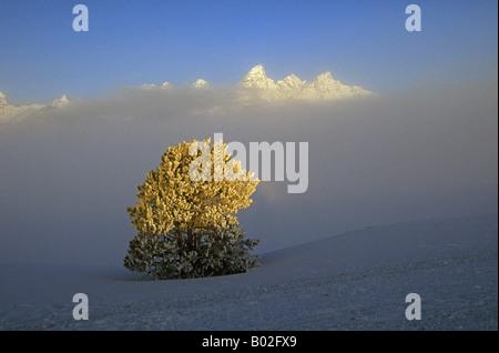 Une vue sur les sommets enneigés des montagnes du Grand Teton à l'aube d'un matin d'hiver dans la région de Jackson Banque D'Images