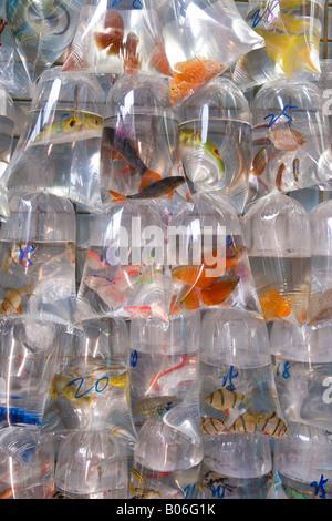 L'Asie, Chine, Hong Kong, Mongkok, le poisson à vendre à Tung Choi Street Market Banque D'Images
