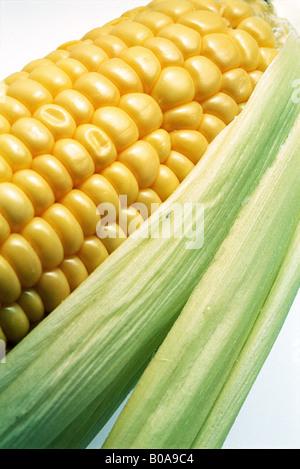 Épis de maïs, close-up Banque D'Images