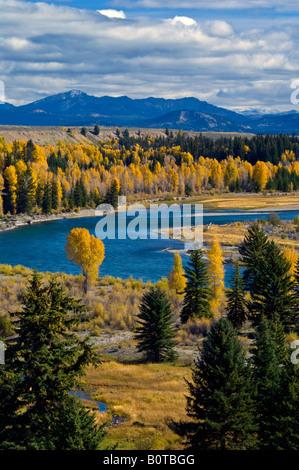Couleurs d'automne sur le tremble et le peuplier arbres le long de la rivière Snake Parc National de Grand Teton Banque D'Images