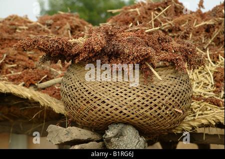 Panier rempli de millet, colis, Cameroun, Afrique