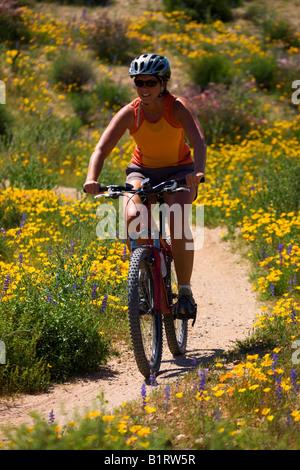 Randonnée cycliste entre la sauvagette à McDowell Mountain Regional Park près de Fountain Hills à l'extérieur de Banque D'Images