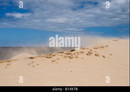 Vent qui souffle sur une dune de sable sur la plage de Findhorn, Moray, Ecosse Banque D'Images