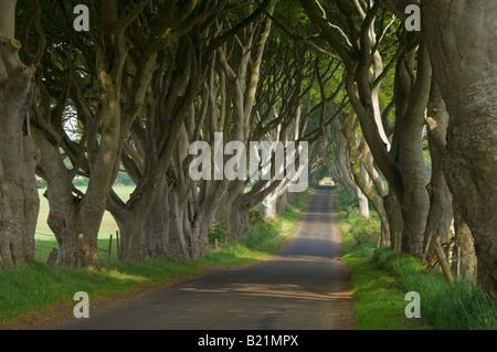 Route bordée d'arbres connus sous le nom de the Dark hedges près de Stanocum le comté d'Antrim en Irlande du Nord Banque D'Images