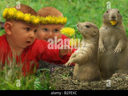 Deux bébés et deux suricates Banque D'Images